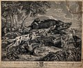 A pack of dogs is attacking and running after wild boar. Etc Wellcome V0021856.jpg