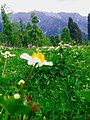 A trip to Neelum valley 06.jpg