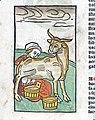 A woman milking a cow, woodcut, 1547 Wellcome L0029211.jpg