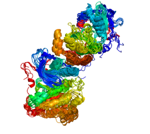 ErbB - A superposition of similar interfaces observed in crystal structures of the ERBB kinases, including EGFR, ERBB2 (HER2) and ERBB4 (HER4). The protein chains are colored from blue to red from N to C terminus. The kinase at the top of each dimer (as shown) activates the kinase at the bottom of each dimer (Zhang et al., Cell v. 125, pp. 1137-1149, 2008). The cluster was identified with the ProtCID database. The image was made with PyMOL.