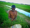 Addalaichannai srilanka Eastern province.jpg