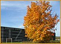 Ahornbaum - panoramio (1).jpg
