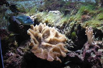 Bergen Aquarium - Tropical fish tank in Bergen Aquarium