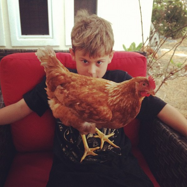 File:Alektorophobia, contact with a chicken.jpg