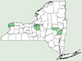 Allium cepa NY-dist-map.png