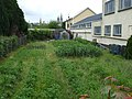 Allotment at Campsie Crescent, Omagh - geograph.org.uk - 840424.jpg