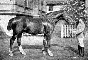 Celle State Stud - Alnok, a Celle stallion born in 1888, was sired by the Thoroughbred Adeptus. The tails of carriage horses and non-Thoroughbreds were historically docked. Adeptus is represented by male line descendants like E.T. FRH and Eiger.