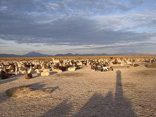 Litoral (Bolivia) Province in Oruro, Bolivia