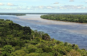 Amazon rainforest - Aerial view of the Amazon rainforest, near Manaus