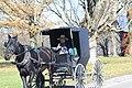 Amish buggy on NY 39, Perrysburg, New York, October 2012 (01).jpg