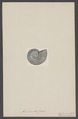 Ammonites jason - - Print - Iconographia Zoologica - Special Collections University of Amsterdam - UBAINV0274 005 10 0008.tif