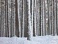 Anagach Wood - geograph.org.uk - 1158706.jpg