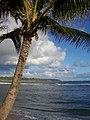 Anahola Palm (327948508).jpg