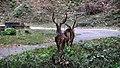 Anamalai Tiger Reserve - panoramio (13).jpg