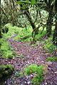 Ang Ka Nature Trail.JPG