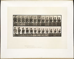 Animal locomotion. Plate 742 (Boston Public Library).jpg