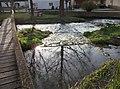 Anlauter-Wasserlauf-Vielfalt - panoramio.jpg