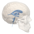 Anterior recess of 3rd ventricle - 02.png