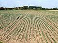 Arable farmland, Fishtoft - geograph.org.uk - 557679.jpg