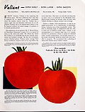 Are you planting Stokes tomato seed this year? (1940) (20334028195).jpg