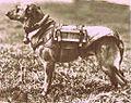 Argentina military dog.jpg