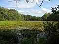 Artichoke river 4.JPG