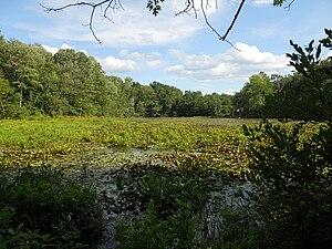 Artichoke River (Massachusetts) - Lower Artichoke River