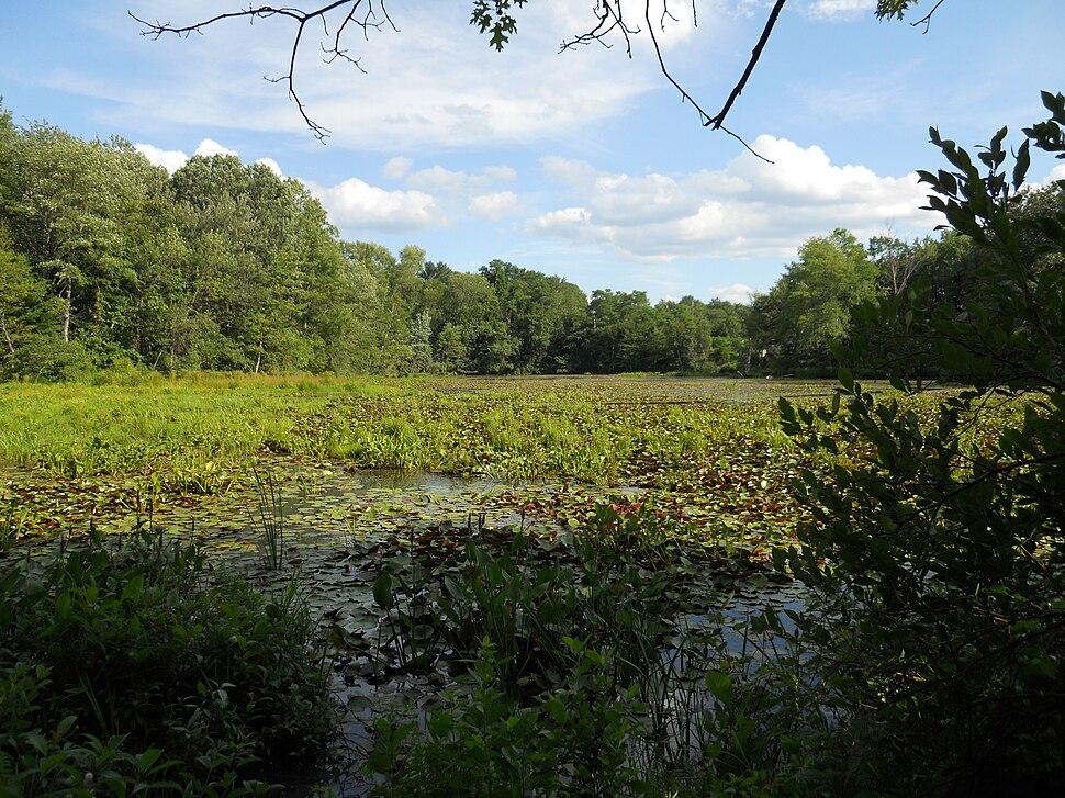Artichoke river 4