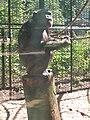 Artis, Zoo, Dierentuin - panoramio (111).jpg