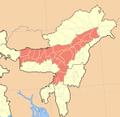 Assam close-up.PNG