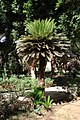 Aswan Kitchener island 7.jpg