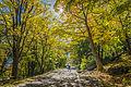Au bonheur de l'automne au parc Mont-Royal (15341888677).jpg