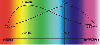 Dog anatomy - Frequency sensitivity compared with humans.