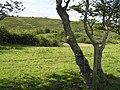 Aughaweel Townland - geograph.org.uk - 1380096.jpg
