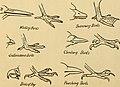 Aunt May's bird talks (1900) (14752314885).jpg