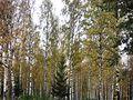 Autumn, Trees going Yellow - Flickr - anantal.jpg