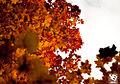 Autumn (5131879236).jpg