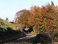 Autumn Colours on the Glen Road - geograph.org.uk - 1289071.jpg