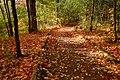 Autumn In The Park (179596607).jpeg