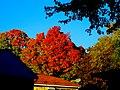Autumn in Madison - panoramio (9).jpg