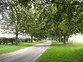 Avenue of trees - geograph.org.uk - 264076.jpg