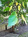 B46 unidentified plant Close-up.jpg