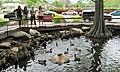BYU Duck Pond (42375341282).jpg