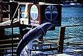 Bahamas 1988 (296) Paradise Island Paradise Lake (24088995971).jpg