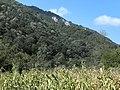 Banat, Nera Canyon - panoramio (5).jpg