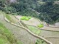Banaue Rice Terraces1.jpg