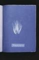 Bangia fusco-purpurea (NYPL b11861683-419700).tiff