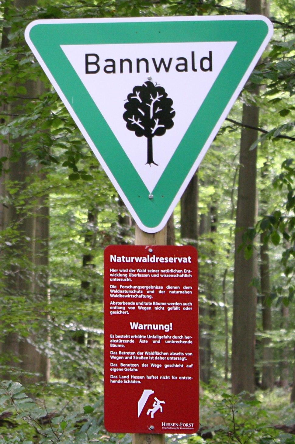 Bannwald rockenberg4