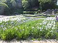 Banshu Yamasaki Iris garden in 2013-6-16 No,73.JPG