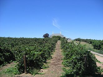 Barossa Valley - Wine grape vines in the Barossa Valley